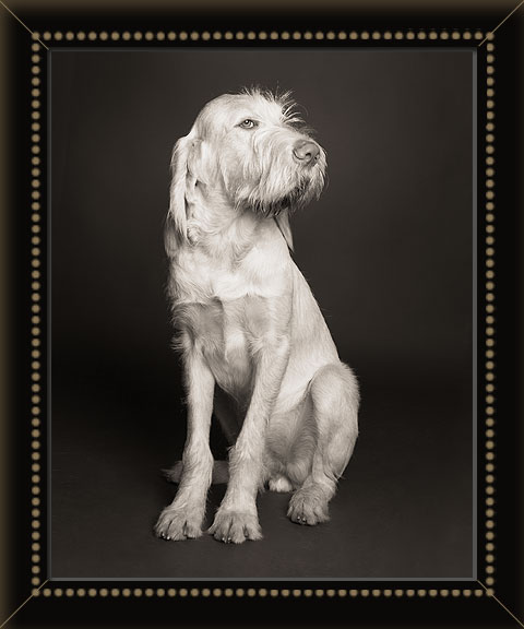 Minneapolis commercial dog photographer, specializing in studio pictures of dogs, cats, horses, people with animals