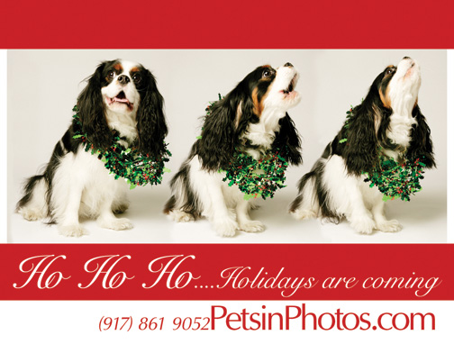 King Charles spaniel barking on Christmas Card