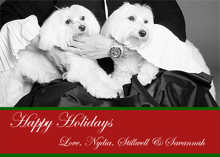 Two Maltese Terriers in woman's lap for Christmas Card