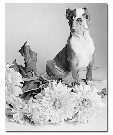 Professional Pet Photographer New York